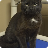 Adopt A Pet :: Ruby - Germantown, TN