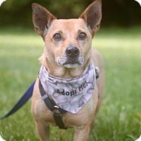 Adopt A Pet :: Cuba Libre - Barrington, RI