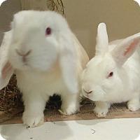 Adopt A Pet :: Precious and Stella - Conshohocken, PA