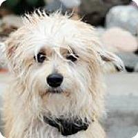 Adopt A Pet :: Dewey - Apple Valley, UT