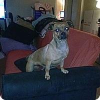Adopt A Pet :: Puca - Anaheim, CA