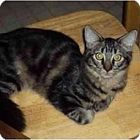 Adopt A Pet :: Puffball - Modesto, CA