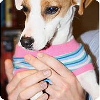 Adopt A Pet :: Jalepeno in Arkansas - Arkansas City, TX