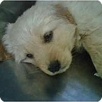 Adopt A Pet :: Poe - Cumming, GA
