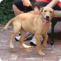 Adopt A Pet :: Millie - Spring, TX