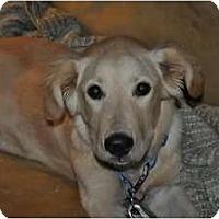 Adopt A Pet :: Kellie - Denver, CO
