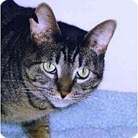 Adopt A Pet :: Sparkler - Medway, MA