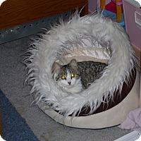 Adopt A Pet :: Misty - Lenhartsville, PA