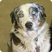 Adopt A Pet :: Ice - Lebanon, CT