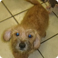 Adopt A Pet :: GONZO - Coudersport, PA