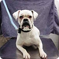 Adopt A Pet :: Stella-Adopted! - Turnersville, NJ