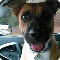 Adopt A Pet :: Zena - Oakland, AR