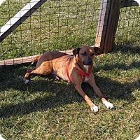 Adopt A Pet :: Jasmine - Salisbury, NC