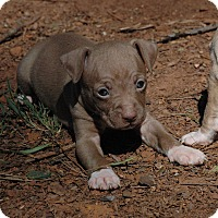 Adopt A Pet :: Mocha - Lawrenceville, GA