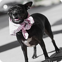 Adopt A Pet :: Courtney - Las Vegas, NV