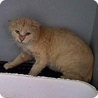 Adopt A Pet :: Sir Charles - Mount Sterling, KY