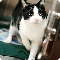 Adopt A Pet :: Willow - Appleton, WI