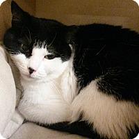Adopt A Pet :: Polly - Salem, NH