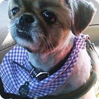Adopt A Pet :: SHAUN - DeLand, FL
