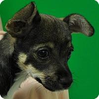 Adopt A Pet :: Rachel - Erwin, TN