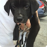 Adopt A Pet :: Finn - Westport, CT