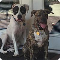 Adopt A Pet :: Danny - Lancaster, CA