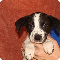 Adopt A Pet :: Ash - Oviedo, FL