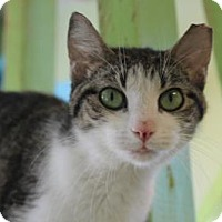 Adopt A Pet :: Oleander - Indianapolis, IN