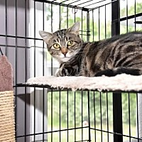 Adopt A Pet :: Honey - Rockaway, NJ