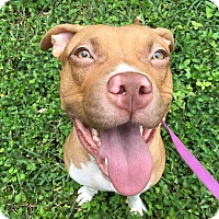 Adopt A Pet :: Aries - Ft. Myers, FL