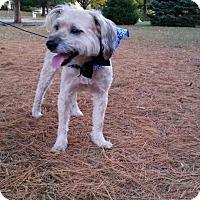 Adopt A Pet :: BUSTER - Bridgewater, NJ