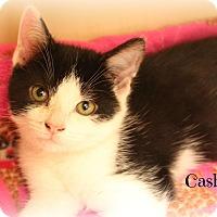 Adopt A Pet :: Cashmere - Glen Mills, PA