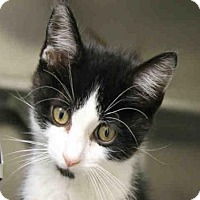Adopt A Pet :: CLIFTON - Decatur, IL