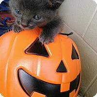 Adopt A Pet :: Claymore - Golsboro, NC