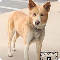Adopt A Pet :: Abby - Staunton, VA