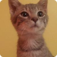 Adopt A Pet :: Mario - Warren, OH