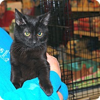 Adopt A Pet :: Teddy - Rochester, MN