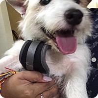 Adopt A Pet :: Zorba - Fort Lauderdale, FL