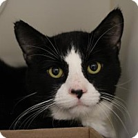 Adopt A Pet :: Smores - Reisterstown, MD