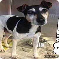 Adopt A Pet :: A417777 - San Antonio, TX