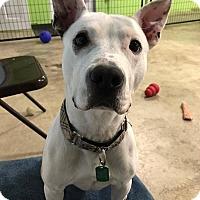 Terrier (Unknown Type, Medium) Mix Dog for adoption in Brunswick, Ohio - Dexter
