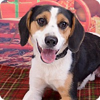 Adopt A Pet :: Buster - Fort Davis, TX