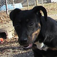 Adopt A Pet :: Eevie - Jackson, MO