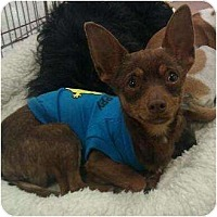 Adopt A Pet :: Enzo - 4 lb little guy - Phoenix, AZ