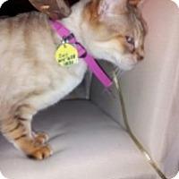 Adopt A Pet :: Zoey - Columbus, OH