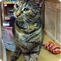 Adopt A Pet :: Autum - Farmingdale, NY