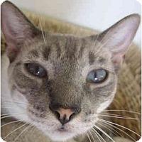 Adopt A Pet :: KOKO - El Cajon, CA