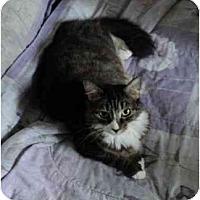 Adopt A Pet :: Jamie - Montreal, QC