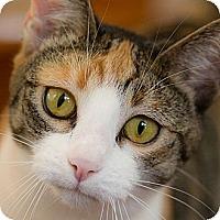 Adopt A Pet :: Dolly Joy - Poway, CA