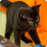 Adopt A Pet :: Lucy - Fountain Hills, AZ